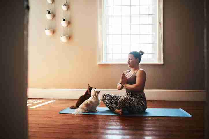 meditation-kittens-yoga